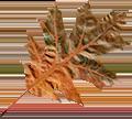 Lewtrenchard Friends Scarlet Oak