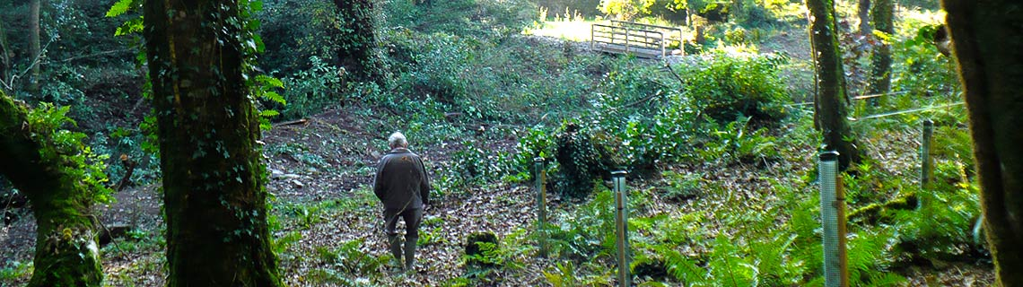 The Friends Of The Forgotten Gardens Of Lewtrenchard